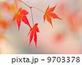 葉っぱ カエデ 紅葉の写真 9703378