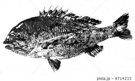 クロダイの魚拓 9714215