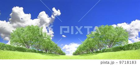 ケヤキ並木 草原 青空 雲 切り抜き合成 9718183