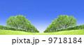 ケヤキ並木 草原 青空 切り抜き合成 9718184
