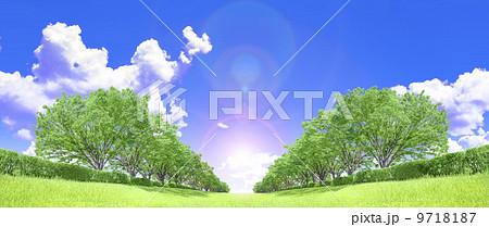ケヤキ並木 草原 青空 雲 逆光 切り抜き合成 9718187