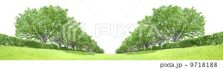 ケヤキ並木 草原 切り抜き合成 白背景 9718188