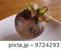 マンゴスチン 熱帯果実 トロピカルフルーツの写真 9724293