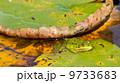 自然 かえる カエルの写真 9733683