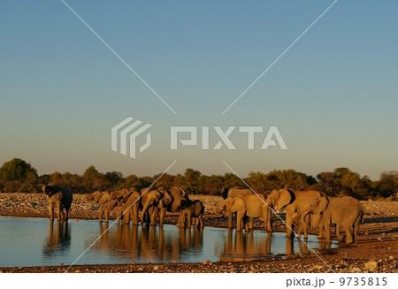 ゾウの家族 9735815
