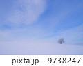 丘の上の木 9738247