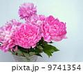 シャクヤク 切り花 花の写真 9741354