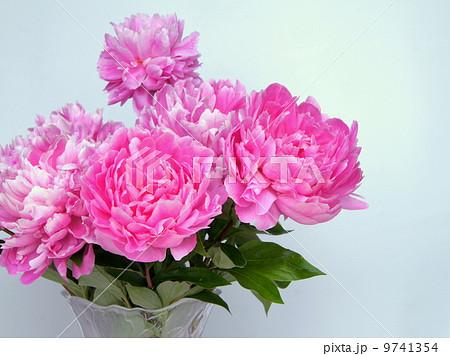 切り花のシャクヤク(ピンク):芍薬 9741354
