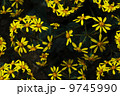 黄色い花 黄色の花 黄色花 9745990