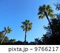 ヤシの木 9766217
