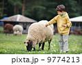 Cute little boy feeding a sheep 9774213
