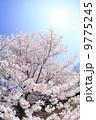 桜 9775245