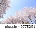 桜 9775251
