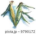 トウモロコシ_水彩 9790172