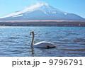 白鳥 山 鳥の写真 9796791