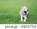 くつろぐ 犬 あくびの写真 9803754