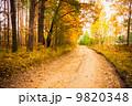 秋 並木道 きれいの写真 9820348