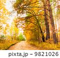 秋 並木道 きれいの写真 9821026