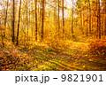 秋 並木道 きれいの写真 9821901