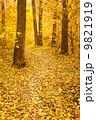 秋 並木道 きれいの写真 9821919