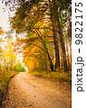 秋 並木道 きれいの写真 9822175