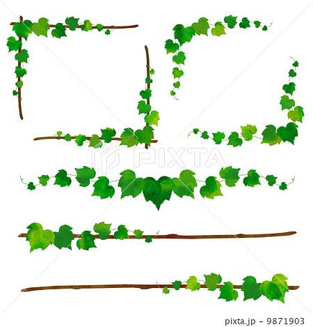 蔦と枝のフレームのイラスト ...