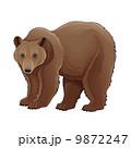 Brown bear. 9872247