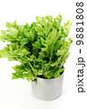 淡色野菜・寸胴鍋に入れたセロリ1株・白バック縦位置 9881808