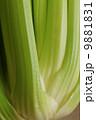 セロリ 食材 野菜の写真 9881831