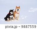 日本犬 雪 動物の写真 9887559