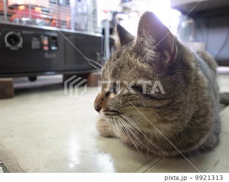 ストーブ前で暖をとる猫 9921313