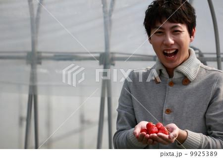 苺狩り (男性 イチゴ いちご 苺 フルーツ 果物 レジャー ビニールハウス デザート) 9925389