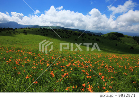 夏の車山高原 9932971