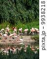 鳥類 動物 アフリカ産の写真 9938218