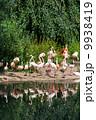 鳥類 動物 アフリカ大陸の写真 9938419