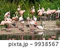 鳥類 動物 アフリカ大陸の写真 9938567