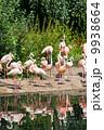 鳥類 動物 アフリカ産の写真 9938664