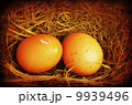 Two golden grungy eggs 9939496