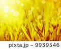秋 背景 農業の写真 9939546