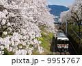 ローカル列車 桜 ソメイヨシノの写真 9955767