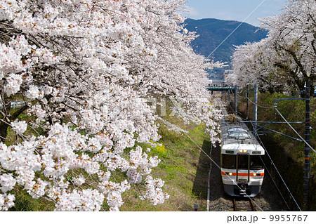 御殿場線・山北の桜並木を行くローカル列車 9955767