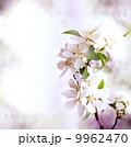 花 アーモンド ハタンキョウの写真 9962470