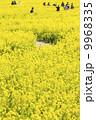 菜の花の小道2 9968335