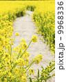 菜の花の小道2 9968336