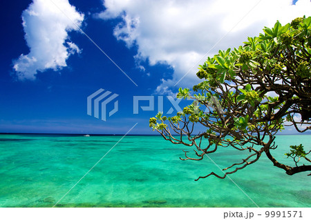 沖縄のエメラルドグリーンの海 9991571