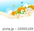 Summer grass 10000189