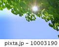 木漏れ日 若葉 新緑の写真 10003190