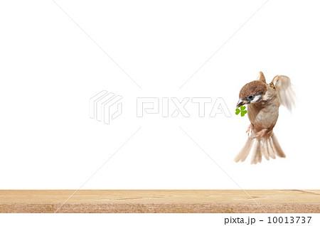 CG背景素材の写真素材 [10013737] - PIXTA