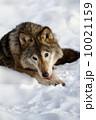 灰色 ほ乳類 哺乳類の写真 10021159