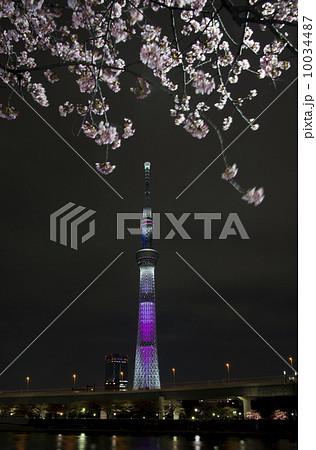 東京スカイツリー 桜特別ライティング「舞」 10034487